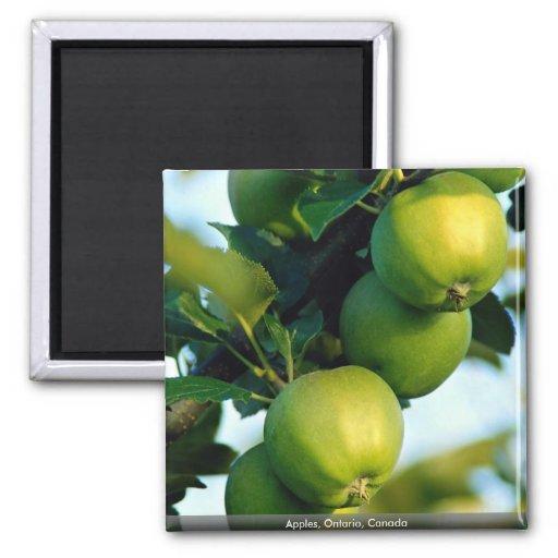 Apples, Ontario, Canada Fridge Magnet