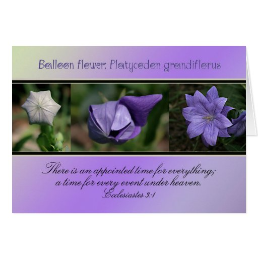 Appointed Time for Everything Greeting Card