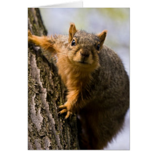 Apprehensively Inquisitive Greeting Card