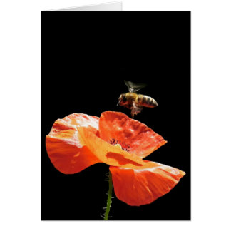 Approach on poppy flower greeting card