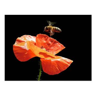 Approach on poppy flower postcard