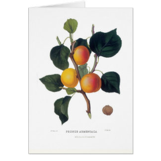Apricot Card