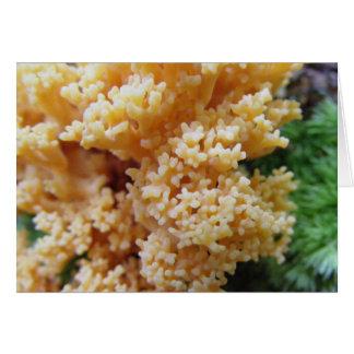 Apricot Coral Fungi Card