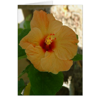 Apricot Hibiscus Flower Card