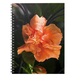 Apricot Hibiscus Notebook
