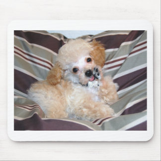 Apricot Poodle Puppy talking  waving Mouse Pad