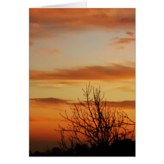 apricot skyscapes Card