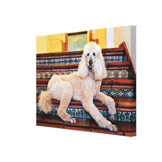 Apricot Standard Poodle - Bocelli Canvas Print