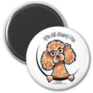 Apricot Toy Miniature Poodle IAAM Magnet