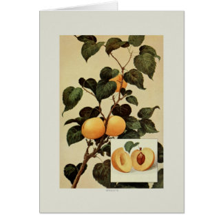 Apricots Card
