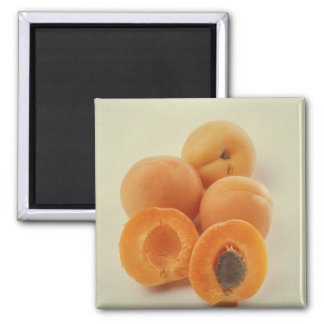 Apricots For use in USA only.) Square Magnet