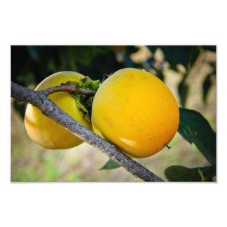Apricots Photo Art