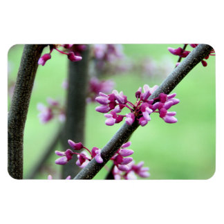 April Redbud Rectangular Photo Magnet