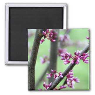 April Redbud Square Magnet
