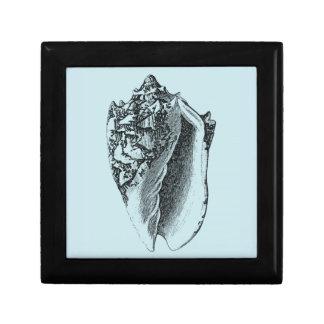 Aqua Conch Shell Gift Box