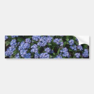 Aqua Forget-Me-Not, (Myosotis Alpestris) flowers Bumper Stickers