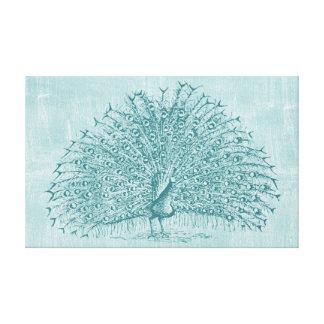 Aqua Peacock Canvas Print