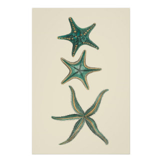 Aquamarine Triple Starfish Poster