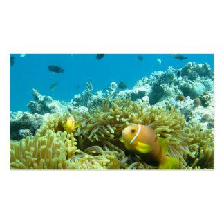 Aquarium Fish Business Card Templates