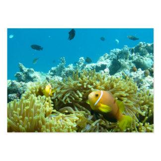 Aquarium Fish Business Cards