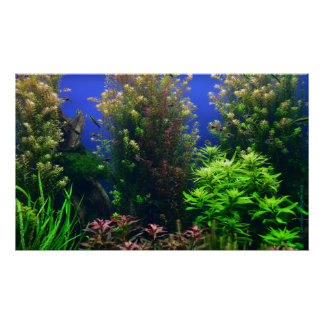 Aquarium for Aquarium Background Poster