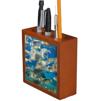 Aquarium In Ushaka Marine World, Durban Desk Organiser
