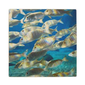 Aquarium In Ushaka Marine World, Durban Wood Coaster
