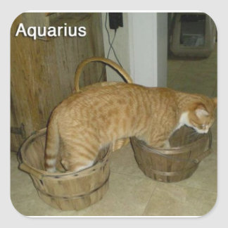 Aquarius Cat Sticker