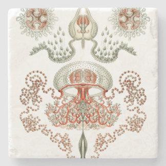 Aquatic Life ~ Haeckel ~ Jellyfish Stone Coaster
