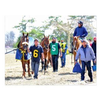 Aqueduct's Top Horses heading to the Paddock Postcard