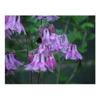 Aquilegia and Bee Postcard