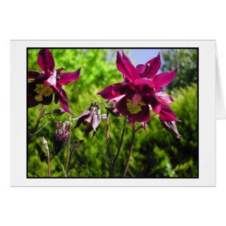 Aquilegia. Plum purple flowers. Card