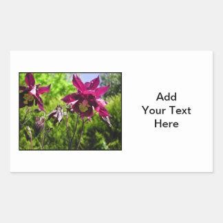 Aquilegia. Plum purple flowers. Rectangular Sticker