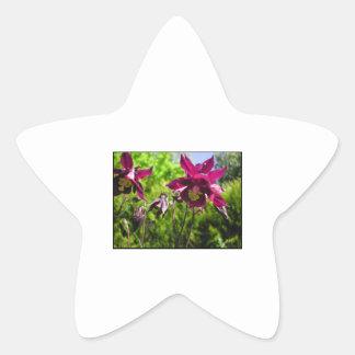 Aquilegia. Plum purple flowers. Star Sticker