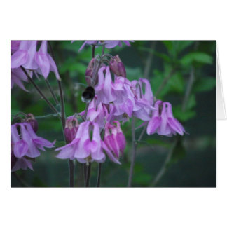 Aquilegia with bee card