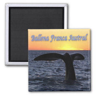 AR - Argentina - Southern Right Whale Square Magnet