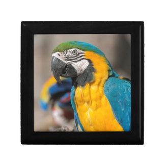 ara ararauna parrot on its perch gift box