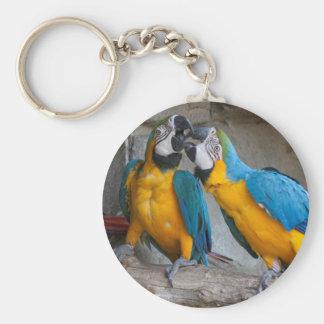 ara ararauna parrot on its perch basic round button key ring