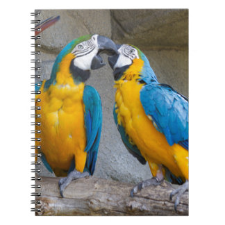ara ararauna parrot on its perch notebook