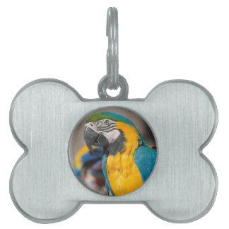 ara ararauna parrot on its perch pet name tag