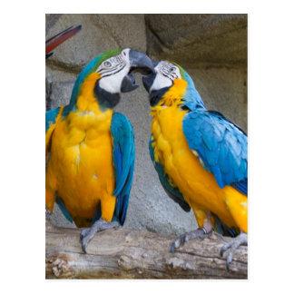 ara ararauna parrot on its perch postcard