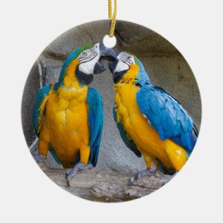ara ararauna parrot on its perch round ceramic decoration