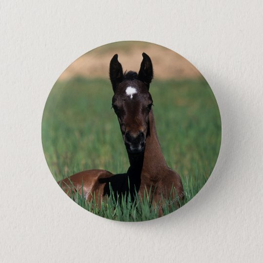 Arab Foal Laying Down 6 Cm Round Badge