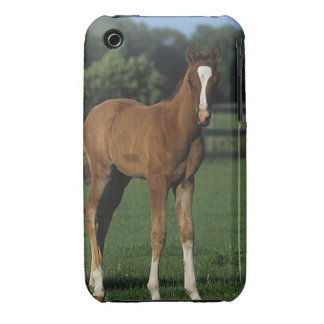 Arab Foals Standing in Grassy Field Case-Mate iPhone 3 Case
