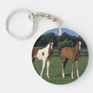 Arab Foals Standing in Grassy Field Double-Sided Round Acrylic Key Ring