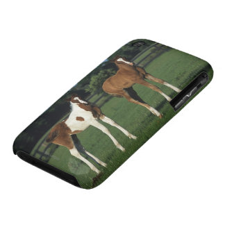 Arab Foals Standing in Grassy Field iPhone 3 Cover