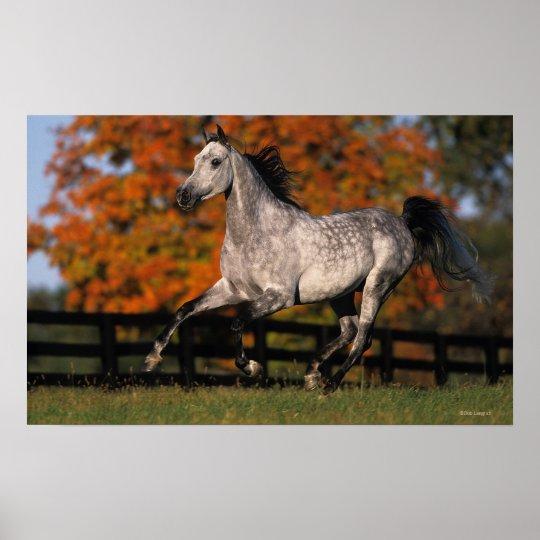 Arab Horse: Autumn 1 Poster