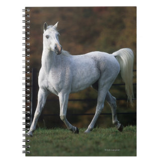 Arab Horse Running 1 Notebook