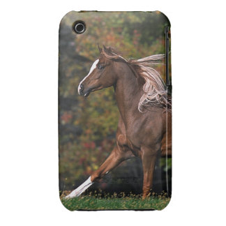 Arab Horse Running in Grassy Field iPhone 3 Covers