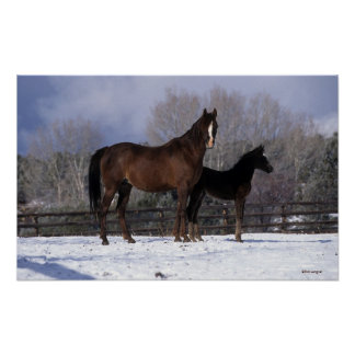 Arab Mare & Foal in Snow Poster